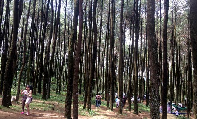 Obyek wisata hutan pinus gunung pancar